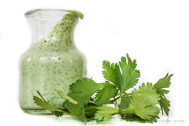 Jar of blended cilantro lime dressing