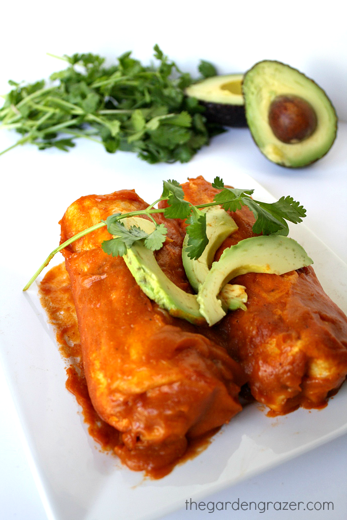 Plate of black bean avocado enchiladas with cilantro